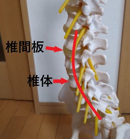 腰椎の説明 腰痛前彎